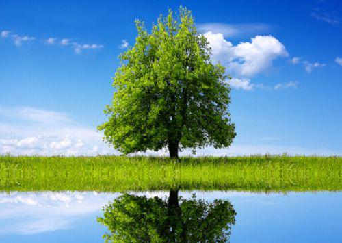 Ecología y Objetivo
