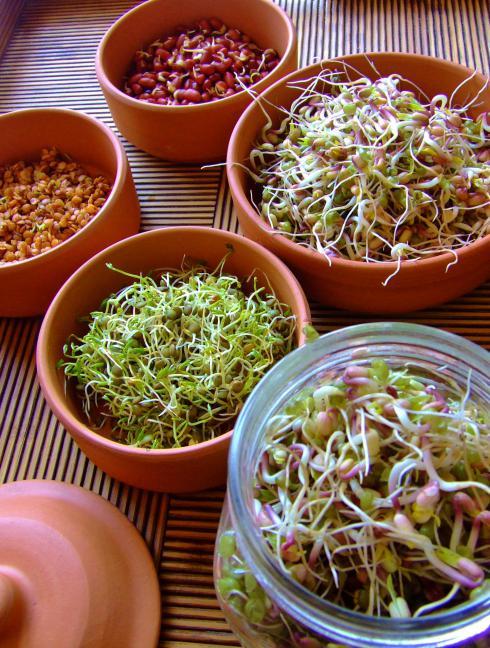 Come brotes de vida - come germinados ¡ Los germinados son alimentos vivos !